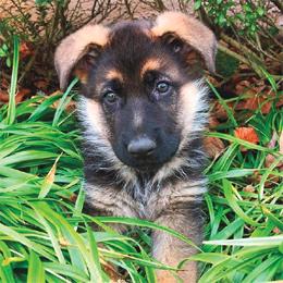 Top Pets 2017